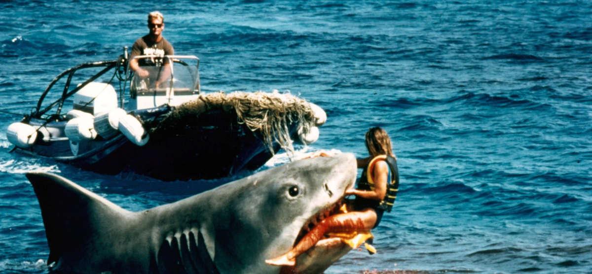Le requin le tigre et les terroristes - Photo de requin tigre a imprimer ...